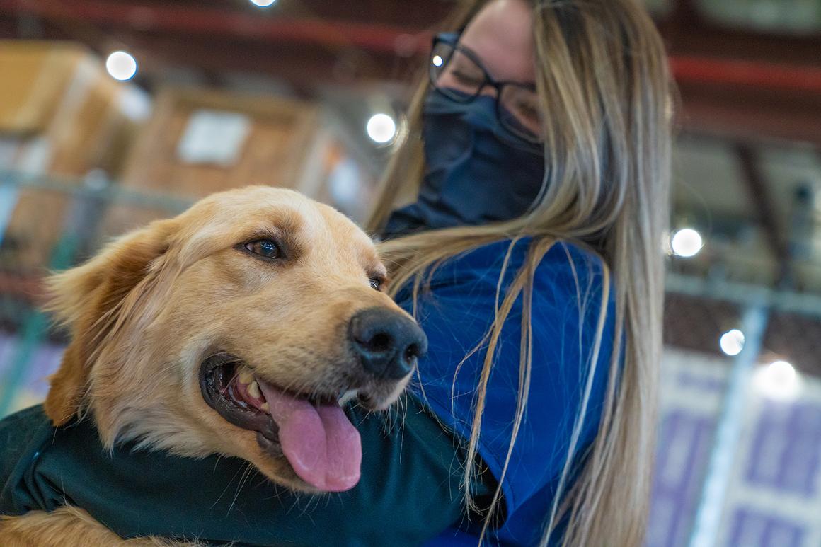 anjing diselamatkan dari cina ke amerika2