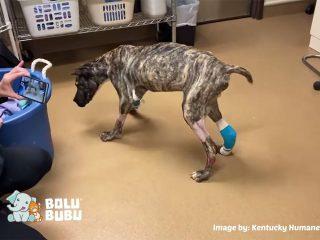 anjing kurus yang berhasil diselamatkan