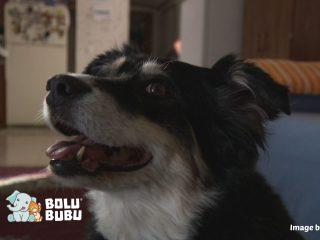 anjing yang mendapat warisan 5 juta dollar