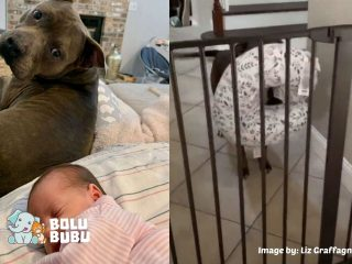 anjing yang senang memanjakan bayi dan pawrentnya