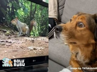 anjing yang terkejut melihat tupai di dalam tv