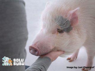 film pendek tentang membunuh hewan untuk dikonsumsi