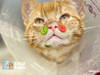 kancing di wajah kucing