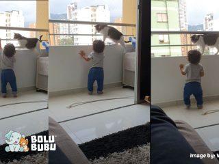 kucing menyelamatkan anak