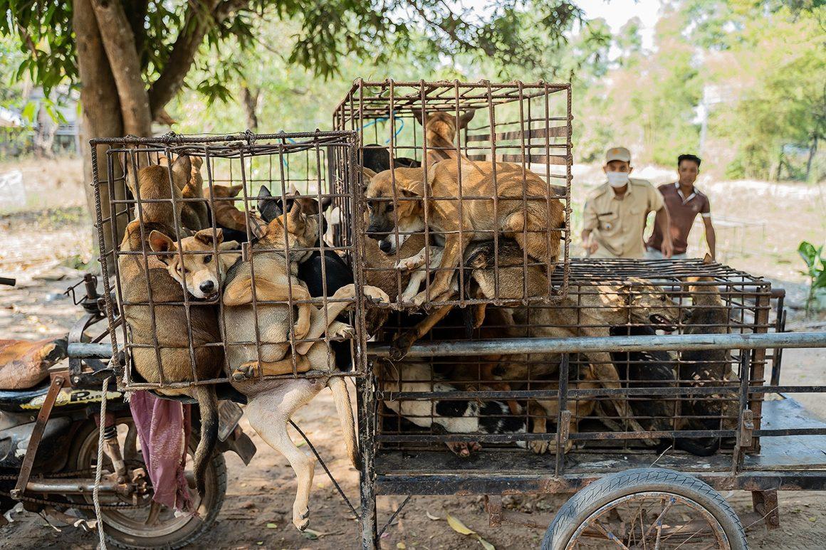 menyelamatkan anjing dari perdagangan anjing liar