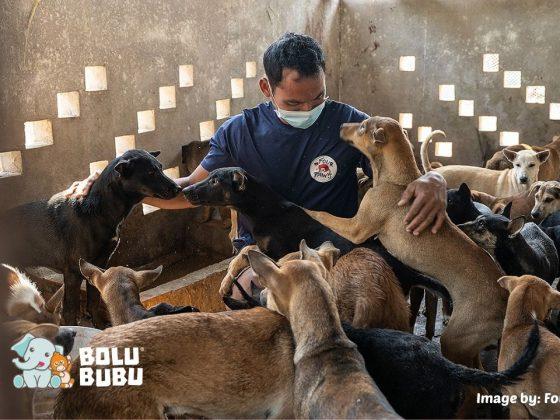 menyelamatkan anjing dari perdagangan daging anjing