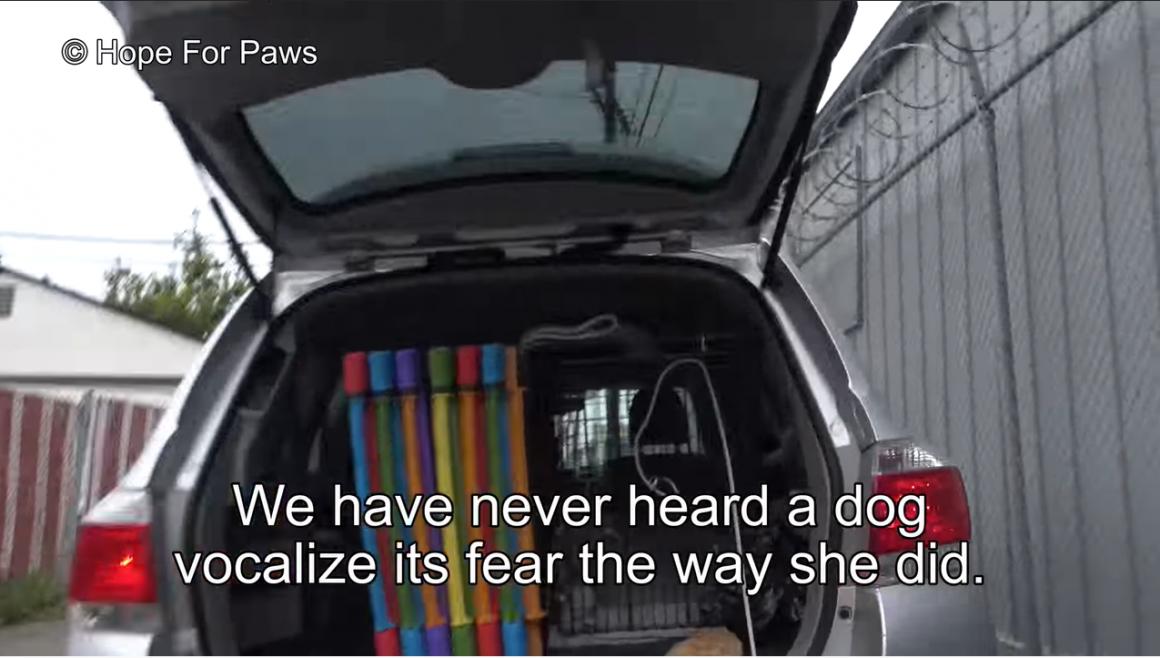 menyelamatkan anjing yang menangis