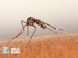 mikroplastik dalam tubuh nyamuk