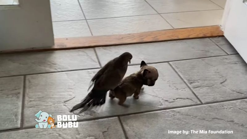 persahabatan burung dan anjing