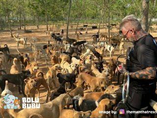 shelter yang menampung 600 anjing di Thailand