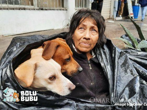 tunawisma merawat 6 anjing
