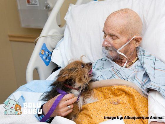 veteran dan anjing kesayangannya