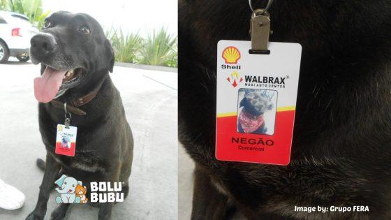 anjing karyawan spbu