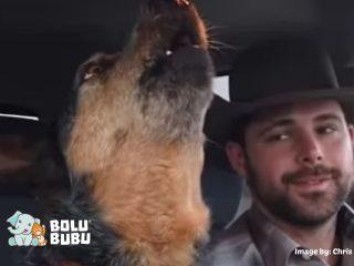 anjing yang hobi bernyanyi