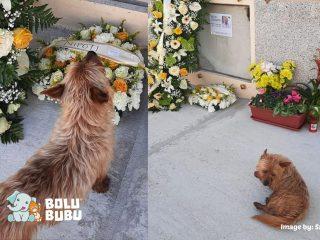 anjing yang mengunjungi makam pemiliknya