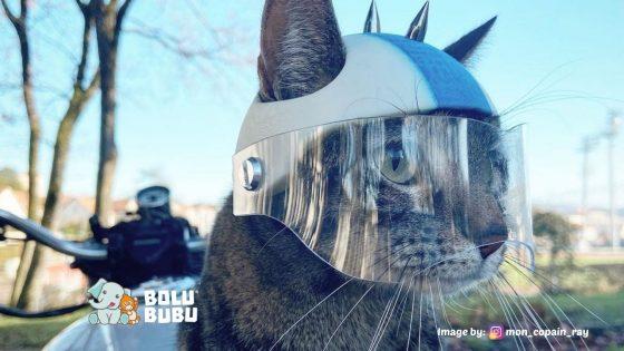 helm kucing