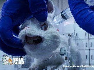 kampanye anti animal testing