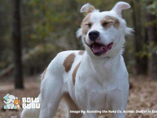 kebahagiaan anjing diadopsi