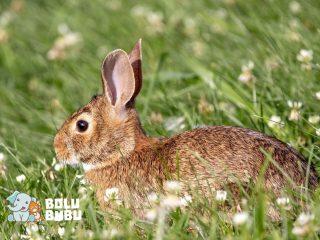 kelinci menemukan benda prasejarah