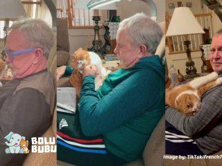 kucing yang mendampingi pemulihan kesehatan tuannya