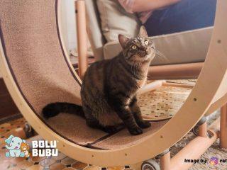 kursi untuk kucing
