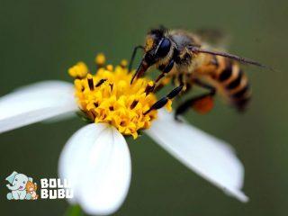 lebah di atas bunga