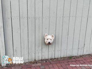 lubang intip anjing