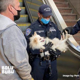 menyelamatkan anjing yang terjebak di eskalator