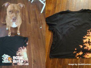 motif unik kaus buatan anjing pit bull