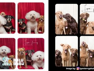 photo booth anjing