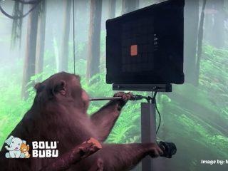 riset monyet bermain video game