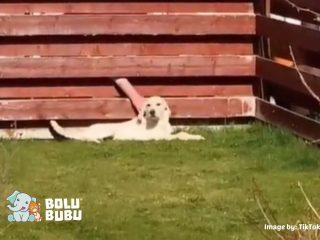 anjing yang mendapat perhatian dari tetangganya