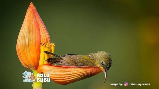 burung berendam di kelopak bunga