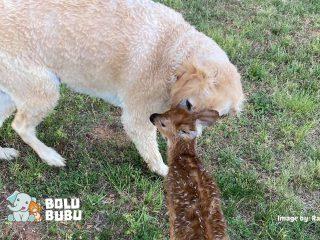 anjing dan rusa bersahabat