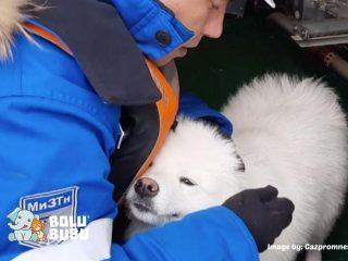 anjing diselamatkan dari kutub utara