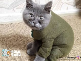 kucing berwajah unik