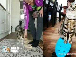 melatih kucing