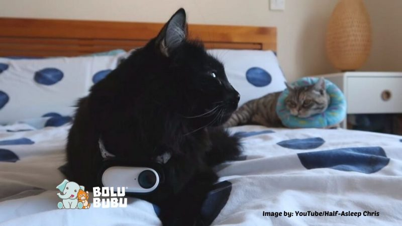 merekam aktivitas kucing