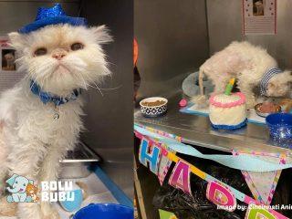 pesta ulang tahun kucing tua