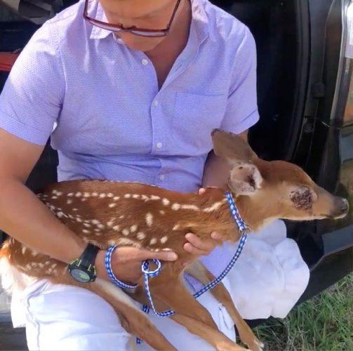 menyelamatkan rusa