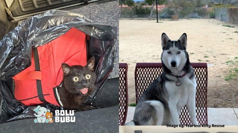 anjing menyelamatkan kucing terlantar