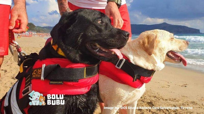 anjing penjaga pantai