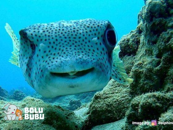 ikan bawah laut