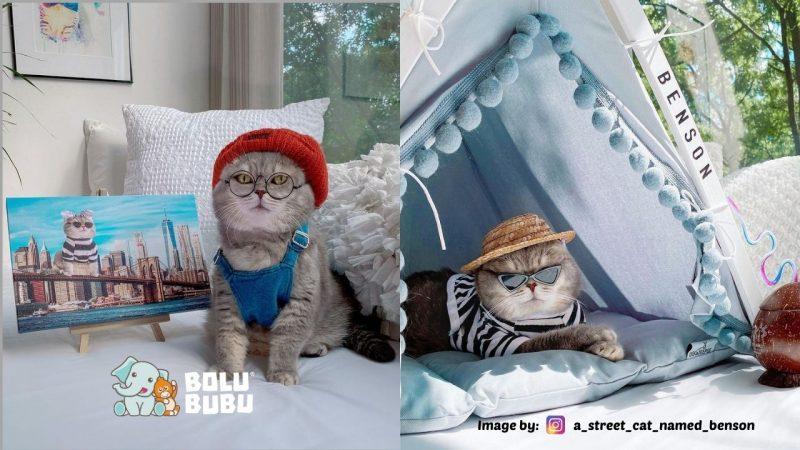 kucing adopsi fashionable