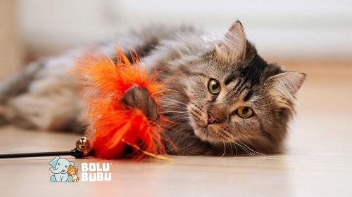 kucing dan mainan bulu