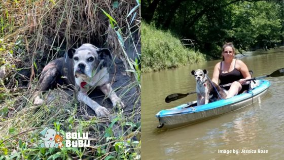 menyelamatkan anjing menggunakan kayak