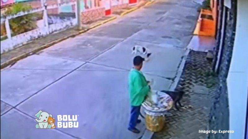 pedagang memberi makan anjing liar