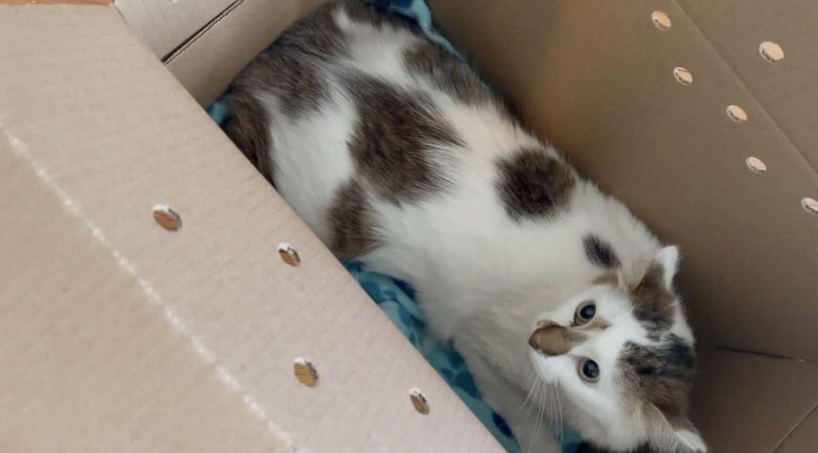 kucing di dalam boks kardus