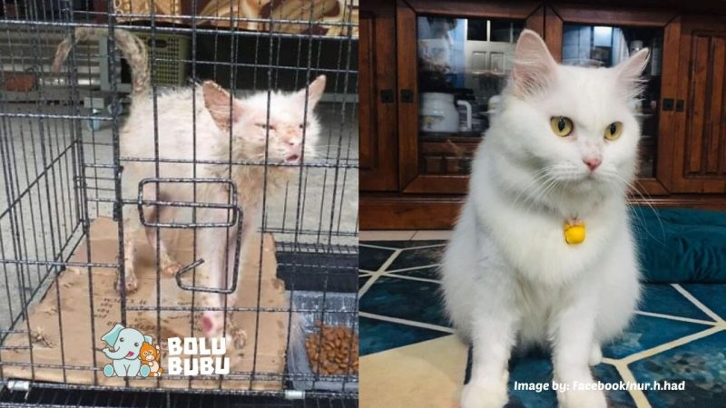 transformasi kucing jalanan